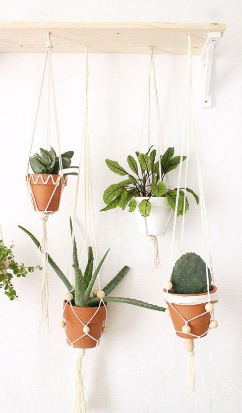 Suspension de plantes