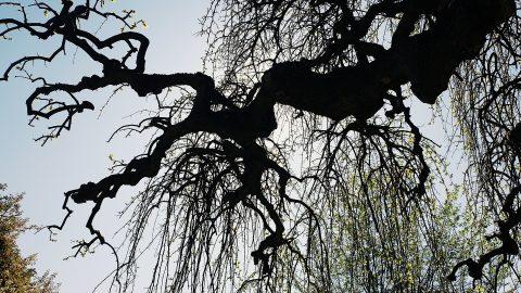 Beauté de la nature, une branche d'arbre dans le ciel.
